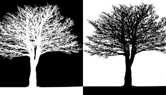 Quadro Black and White Trees