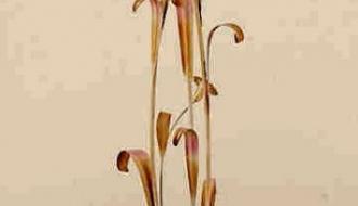 Candeeiro de Pe Flora